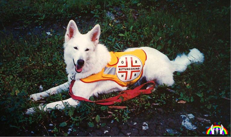 AC American - Canadian - White Shepherd - White Lady von RGR
