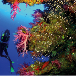 korallen-impressionen-hinweis-rgr