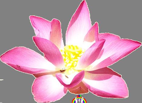 Lotus Blume Logo RGR