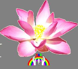 lotusbluete-rgr