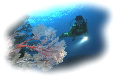 taucherin-im-korallenriff-rgr